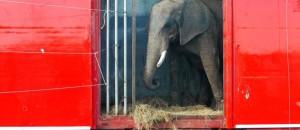 Action cirque sans animaux ce samedi