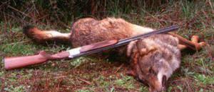 Action pour proteger les loups