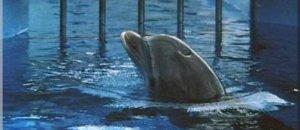 Melisa Sevim, ex-dresseuse de dauphins : « Je ne supportais plus de gagner ma vie de cette façon ! »