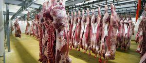 «Les bêtes sont encore vivantes au moment où on les tronçonne»-  interview d'Anne de Loisy
