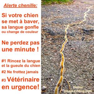 alerte chenilles