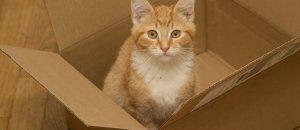 Un kit gratuit pour lutter contre l'abandon de plus de 60.000 chiens et chats l'été