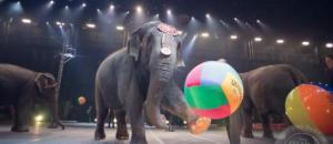 Un célèbre cirque américain renonce aux numéros d'éléphants