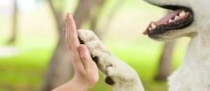Conf -débat -dîner «Éthique et responsabilité face à l'exploitation animale»