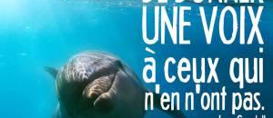 Marineland d'Antibes: Le dauphin Alizé est mort à 24 ans