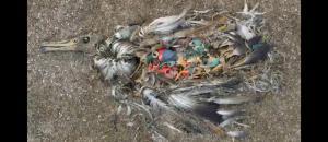Alerte aux déchets plastiques dans la Méditerranée (article Nice Matin)