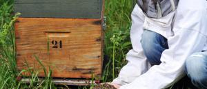 Ruches décimées : «Les abeilles ont été empoisonnées»
