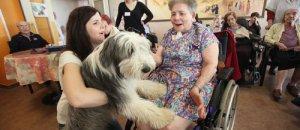 Zoothérapie à Nice : un lapin, un chien et le sourire revient (article Nice matin )