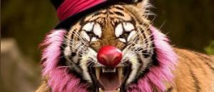 Des bébés lions, tigres et ours subissent un dressage ignoble dans ces cirques chinois