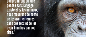 Collectif Animalier du 06 a partagé la photo de GAIA Kids (fr).