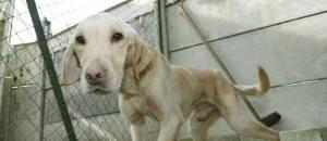 Collectif Animalier du 06 a partagé la photo de Ajpla (Association Justice Pour Les Animaux).