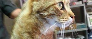 Collectif Animalier du 06: Un S.O.S pour cette adorable petite minette