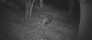 Balade nocturne & écoute/observation de la faune présente dans la vallée de l'Estéron