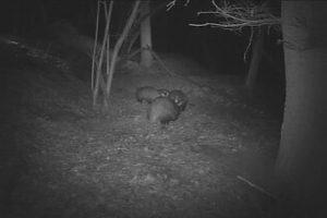 faune nocturne