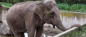 nice-matin:BB interpelle le préfet du var au sujet du zoo de Fréjus