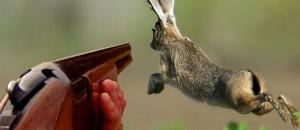 Soyons nombreux à manifester contre la chasse et le piégeage !