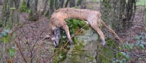 Premier week-end de chasse…