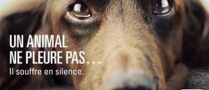 Contre la maltraitance animale, besoin d'aide!