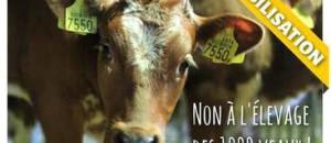 26 mars: NON à la ferme-usine des 1000 VEAUX!!