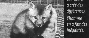 conférence à la fac de Droit: faut-il un code animalier ?