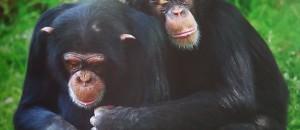 Emission sur l'empathie des animaux