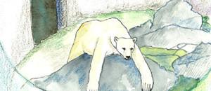 Pauvre ours polaire de Marineland!