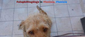 Happening Silencieux contre l'abattage des chiens en Tunisie  samedi 2 juillet – Quelques photos