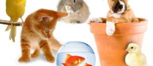 Aide aux animaux des victimes du 14 juillet