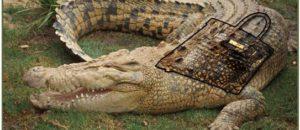 Demandez à Hermès de cesser d'utiliser la peau de crocodile et d'alligator !