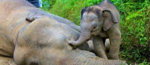Rassemblement contre L'extinction des Éléphants et Rhino