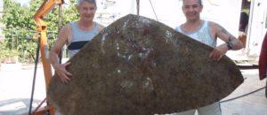 Un scientifique azuréen dénonce la pêche d'une raie en danger d'extinction