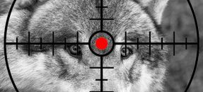 Rassemblement contre le massacre des loups