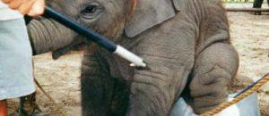 Monaco : les animaux dans les cirques…