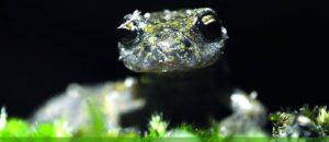 Conférence naturaliste sur les espèces animales des AM