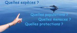 Conférence : Les Cétacés au large de nos côtes