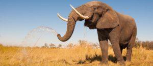 Rassemblement contre l'extinction des éléphants & des rhinocéros