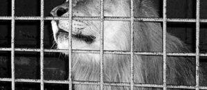 Monaco : stop aux numéros de cirque avec animaux !