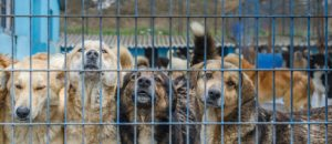 Concert Caritatif Pour aider les chiens du Refuge De Alina en Roumanie