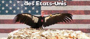 Rencontres incroyables : oiseaux et mammifères des Etats Unis