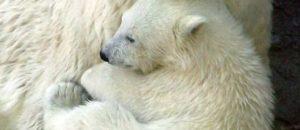 Manifestation dans le cadre de la journée internationale pour les ours
